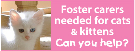 Foster appeal